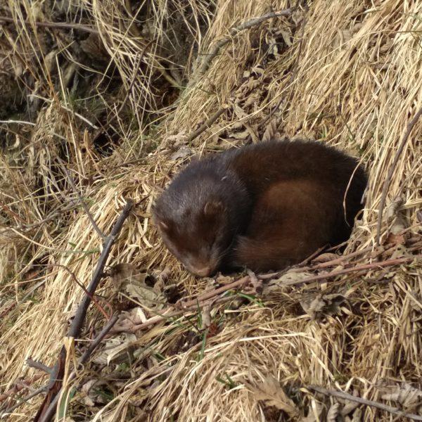 Животные острова Кижи